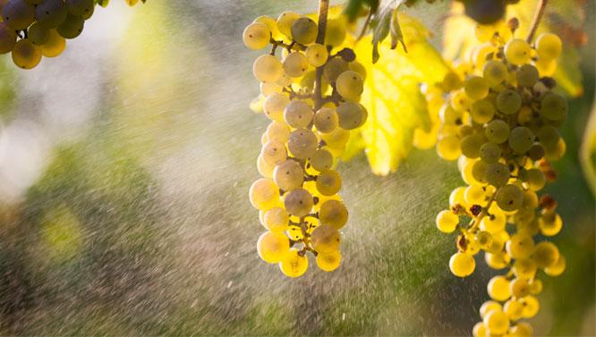 Comprar Vinos Caíño Blanco