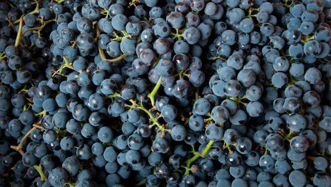 Comprar Vinos Monastel de Rioja