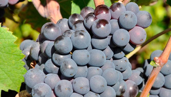 Comprar Vinos Monastrell