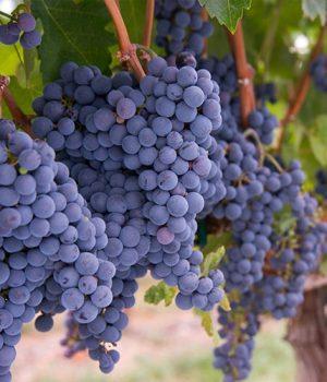 Información sobre Vino Ecológico